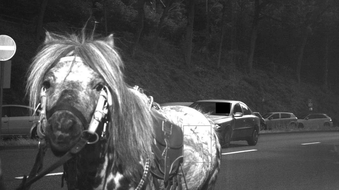 Kurioses Blitzer-Bild: Pferd von Radarfalle geblitzt.