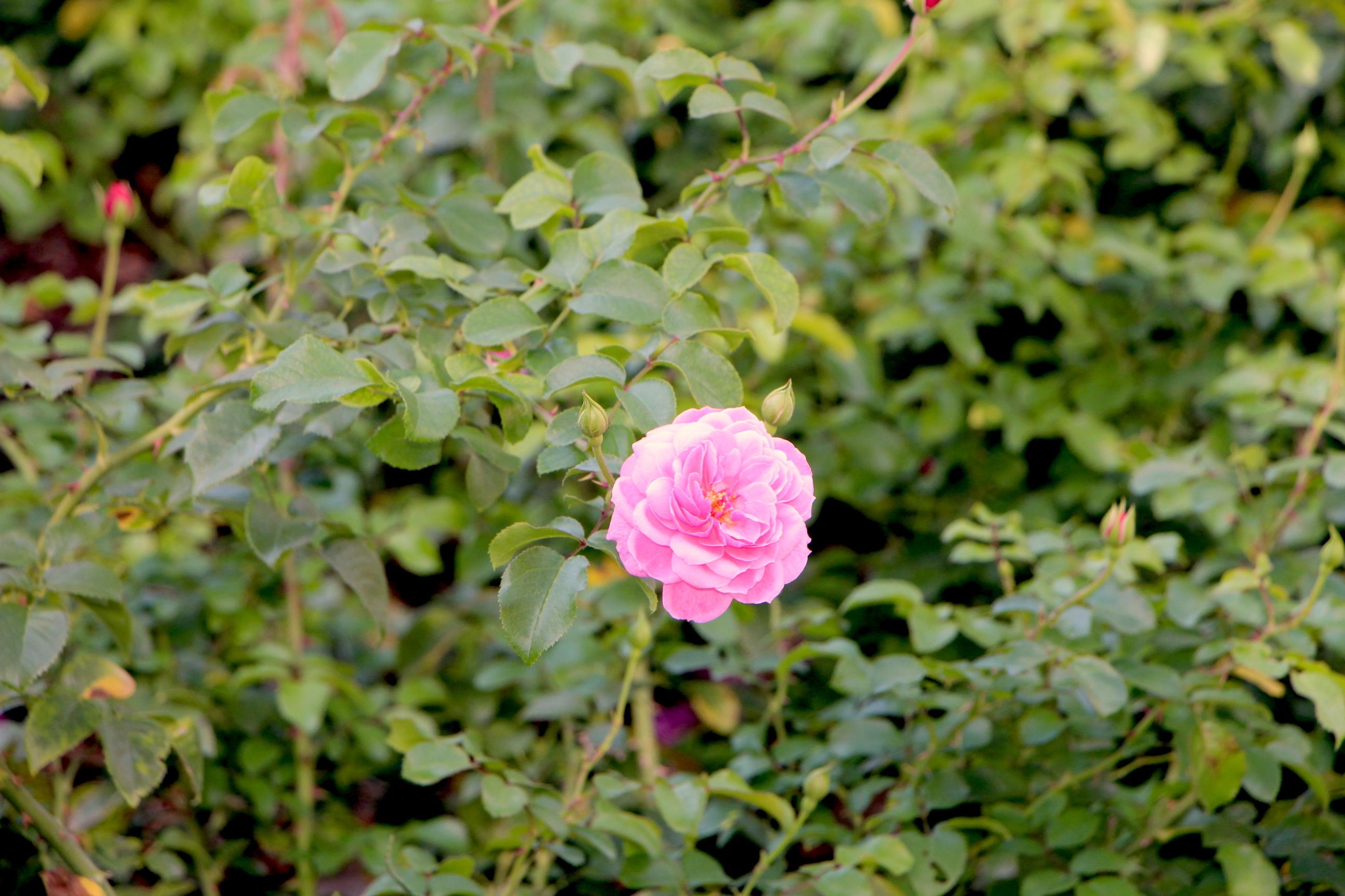 download pflanzen garten im winter | siteminsk, Gartengerate ideen