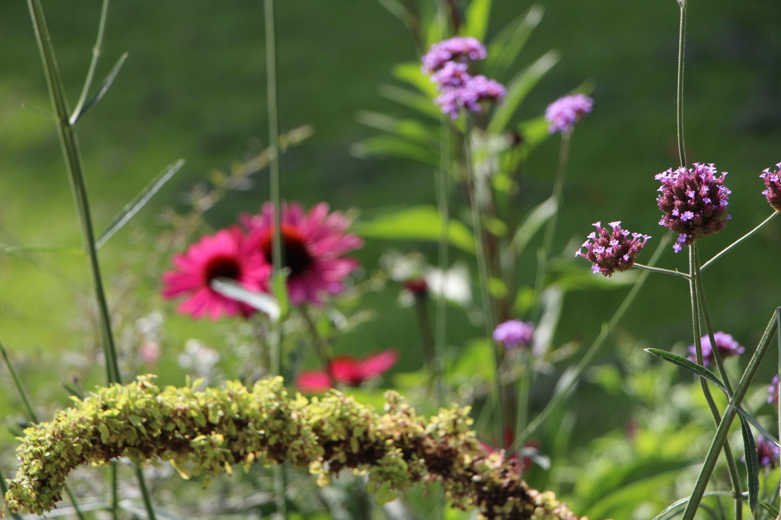 1612411680-luisenpark-sommer-herbst-winter-fruehling-saison-blumen-pflanzen- garten-haus-deko-jahreszeit-mannhei, Gartengerate ideen