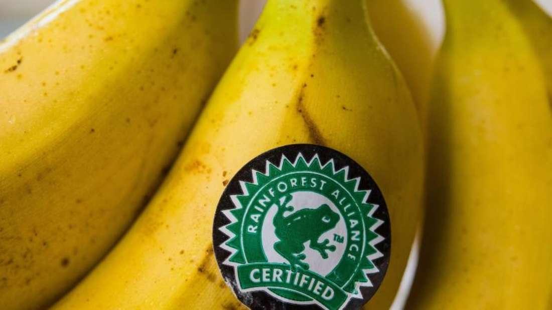Laut Oxfam sind auch auf Plantagen, die mit dem weit verbreiteten Nachhaltigkeitssiegel der Rainforest Alliance - erkennbar am grünen Frosch - zertifiziert wurden, die Zustände katastrophal. Foto: Patrick Pleul