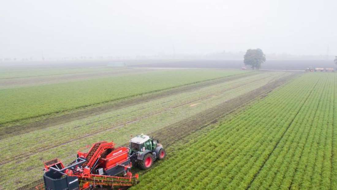 Ein Landwirt in Niedersachsen bei der Ernte von Bio-Möhren. Foto: Julian Stratenschulte