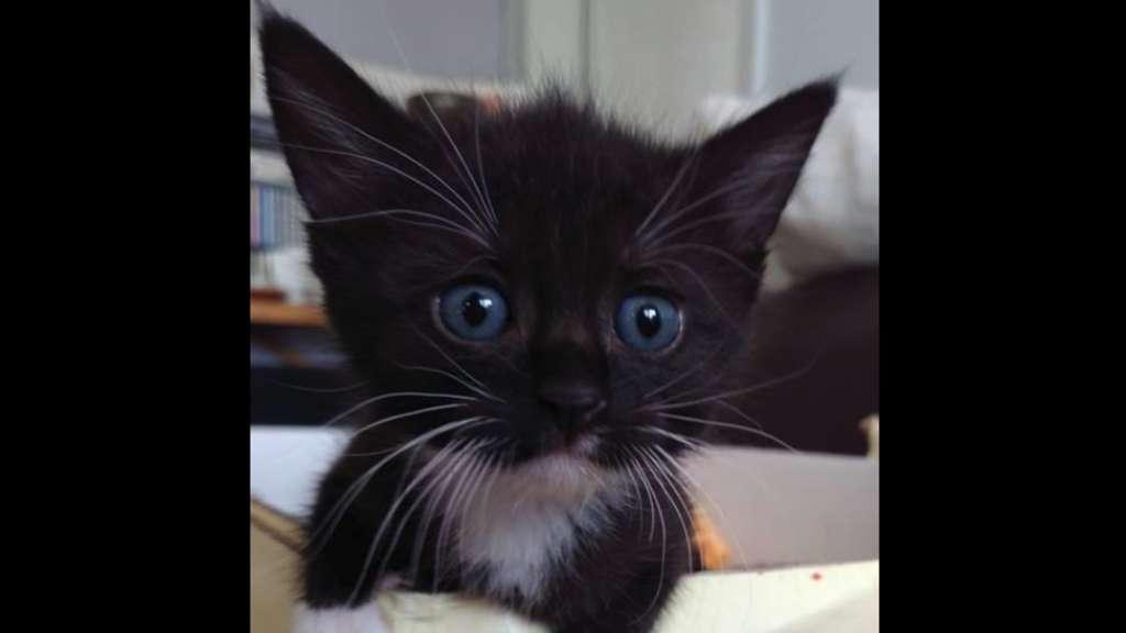 Bad Dürkheimfreinsheim Viele Baby Katzen Im Tierheim Vermittlung