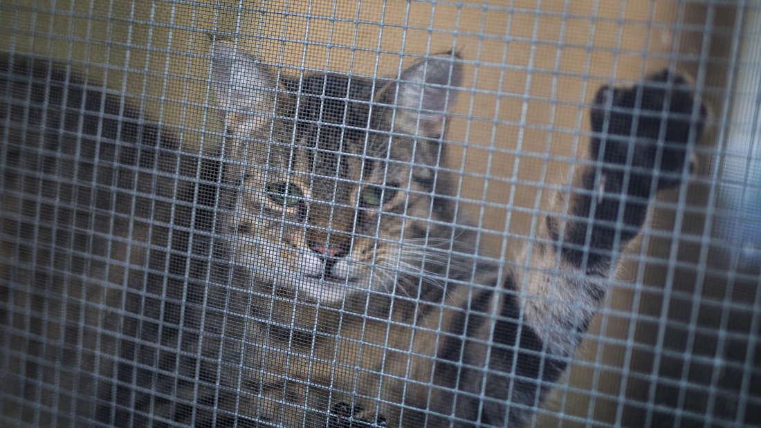 Tierärztin hält 18 Katzen, über 40 Hunde und drei Kängurus (Symbolfoto)