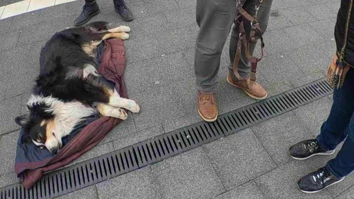 Hund Vergiftet überlebenschance