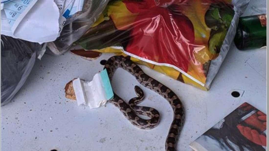 Eine Schlange liegt im Altkleidercontainer