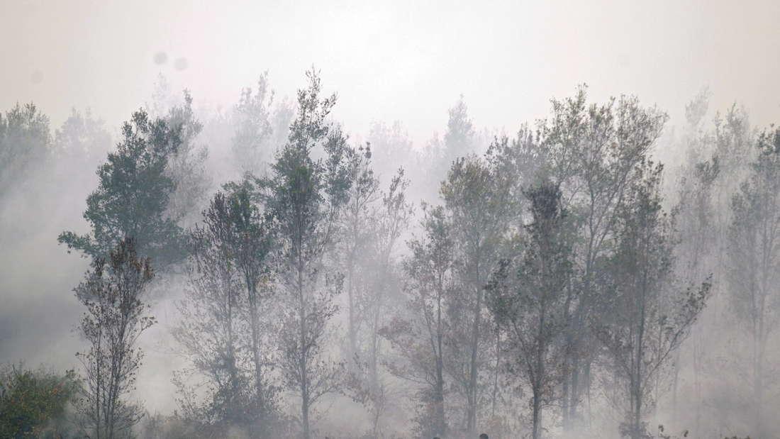 Brandrodung in Borneo: Von Menschen gemachte Probleme sorgen weltweit für die Dezimierung zahlreicher Tierarten (Symbolbild)