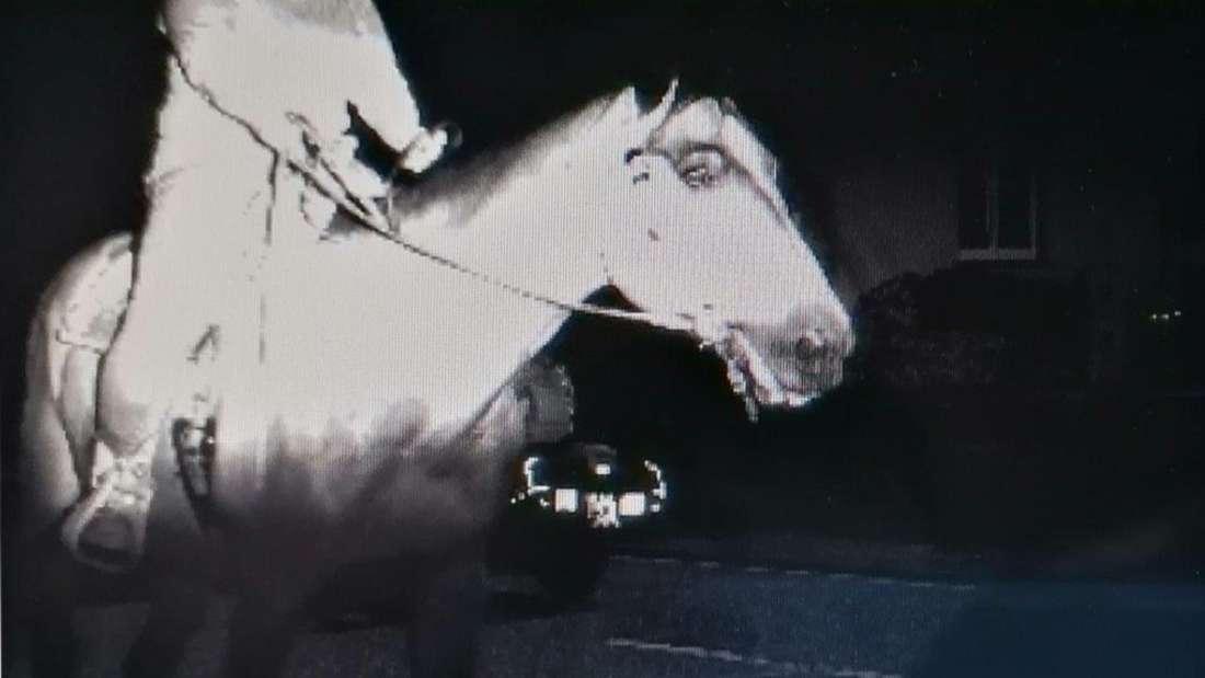 Skurriles Blitzer-Foto: Ein Pferd mit Reiter schützt einen Motorradfahrer