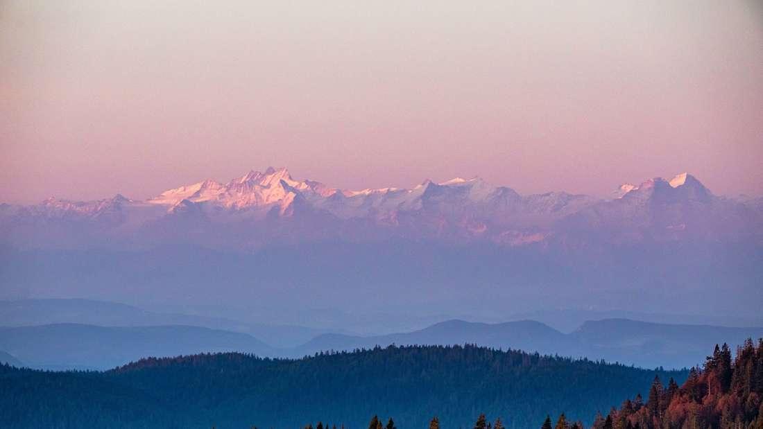 Die schneebedeckten Spitzen der Schweizer Alpen werden vom Licht der aufgehenden Sonne beleuchtet und sind dank klarer Sicht vom Feldberg im Schwarzwald aus sichtbar.