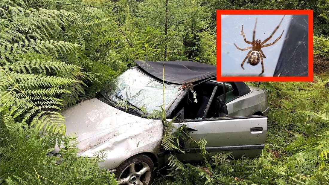 Das völlig demolierte Auto nach dem Spinnen-Unfall (Fotomontage)