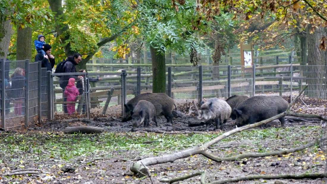 Im Wildpark Ludwigshafen-Rheingönheim leben 200 Tiere aus 30 europäischen Wildarten.
