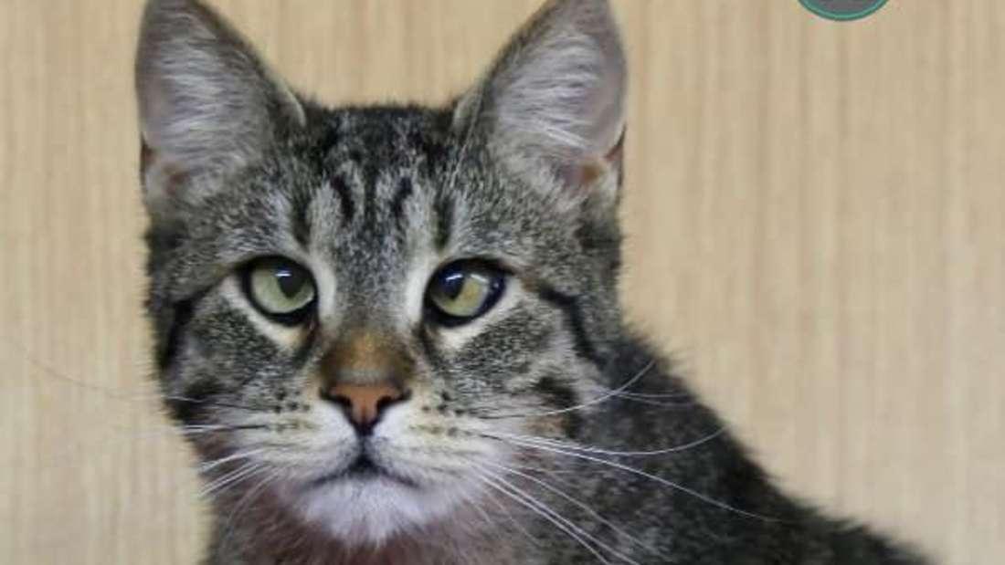Katze Käthe schielt