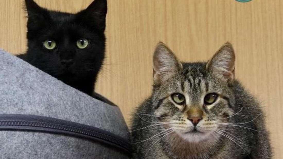 Die Katzen Klara und Käthe