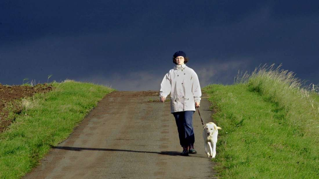 Ludwigshafen: Hunde müssen auch in den begrünten Randgebieten der Ortsteile angeleint werden (Symbolfoto).